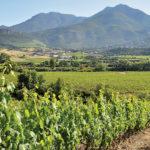 The vineyards and cellar at Domaine Orenga de Gaffory in Patrimonio, Corsica.
